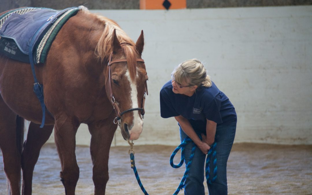 PATH Equine Specialist in Mental Health and Learning Workshop and Skills Test